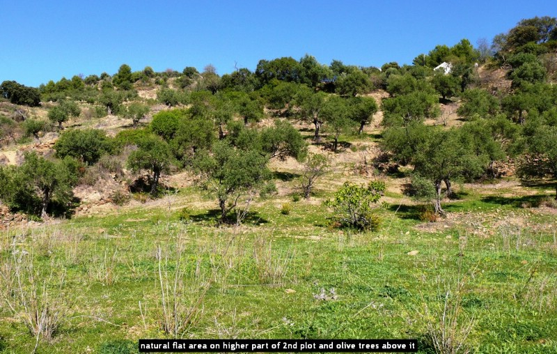 natural flat area on higher part of 2nd plot and olive trees above it