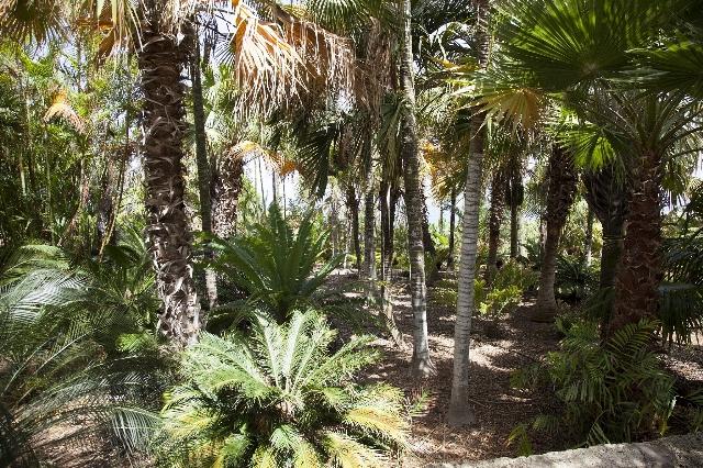 FC36 - Jardín botánico