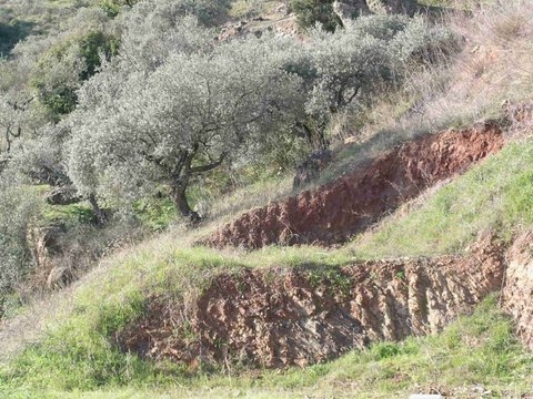 boundary trees