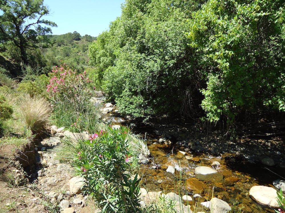 M454_23 river